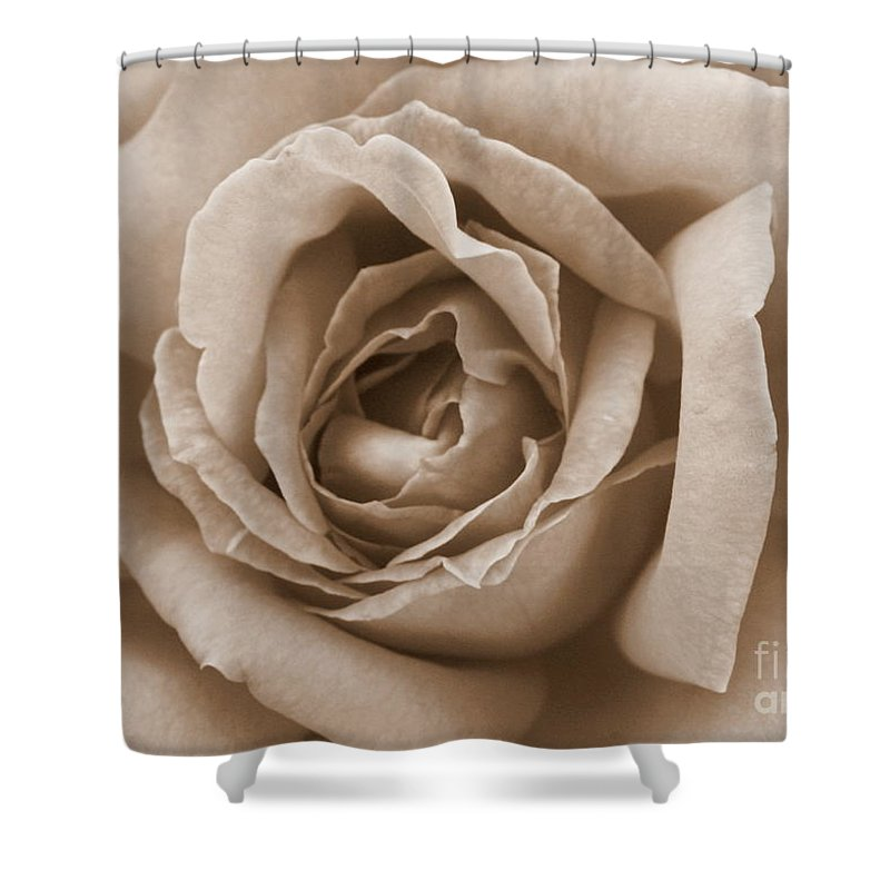 Sepia Shower Curtain featuring the photograph Sepia Rose by Carol Groenen