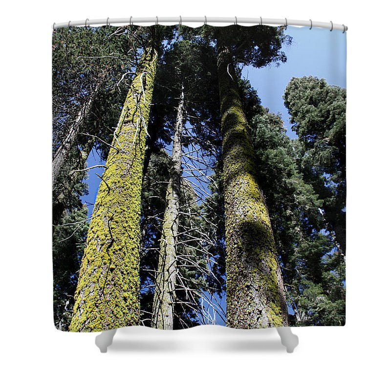 Sequoia National Park Shower Curtain featuring the photograph Sequoia National Park by Joanne Coyle