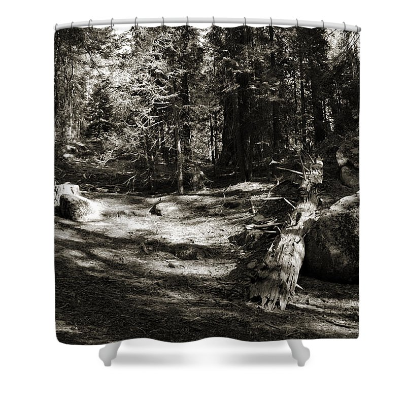 Sequoia Shower Curtain featuring the photograph Sequoia Solitude by Joanne Coyle