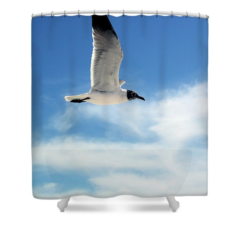 Seagull Shower Curtain featuring the photograph Serenity Seagull by Marie Hicks