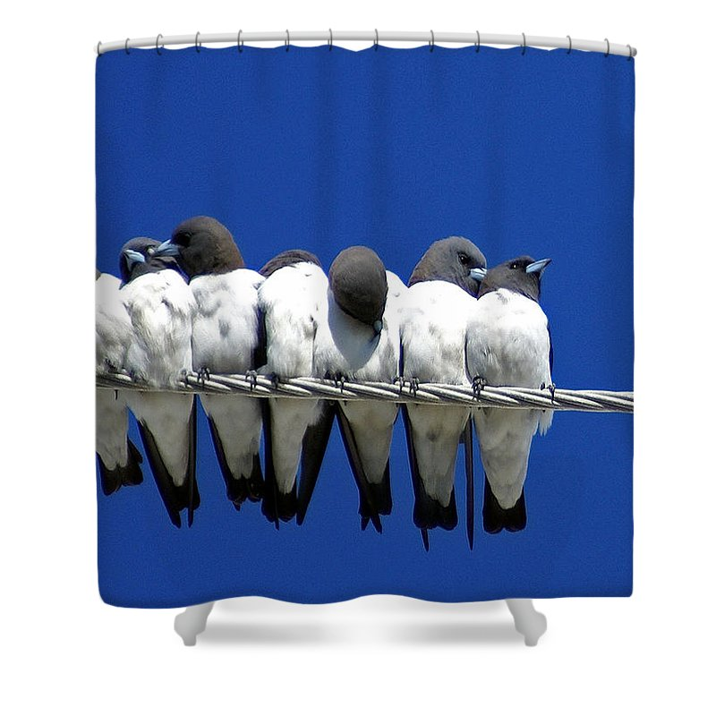 Animals Shower Curtain featuring the photograph Seven Swallows Sitting by Holly Kempe