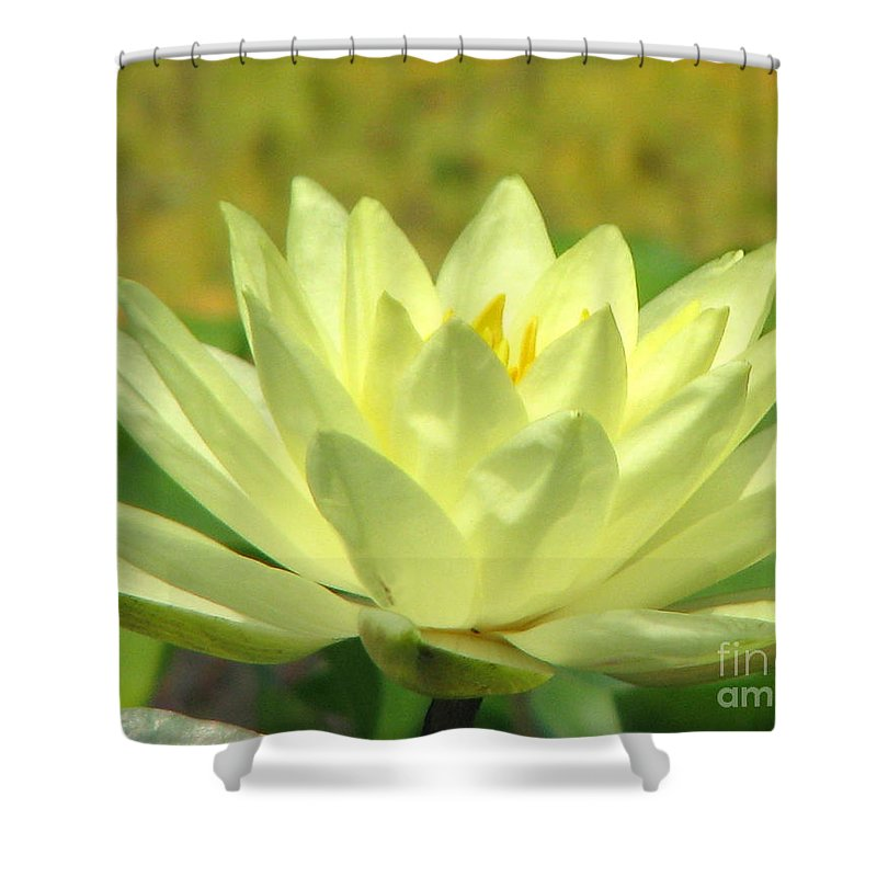 Lillypad Shower Curtain featuring the photograph Shades by Amanda Barcon