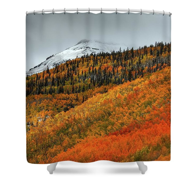 Aspen Trees Shower Curtain featuring the photograph Shades Of Autumn by Bill Sherrell