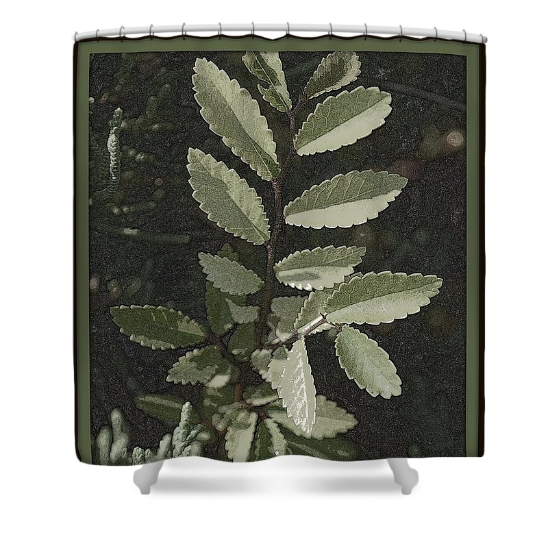 Shades Shower Curtain featuring the photograph Shades Of Green by Anita Goel