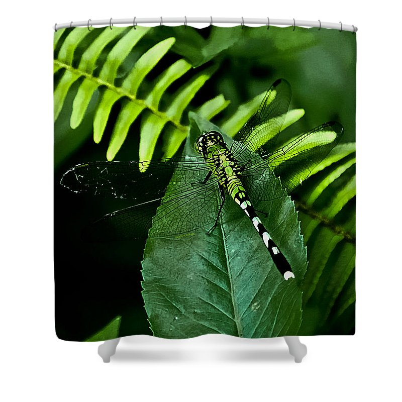 Dragonfly Shower Curtain featuring the digital art Shades Of Green by DigiArt Diaries by Vicky B Fuller