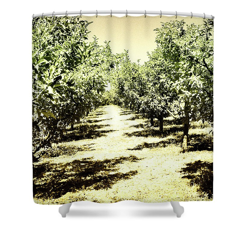 Trees Shower Curtain featuring the photograph Shady Grove Palm Springs by William Dey