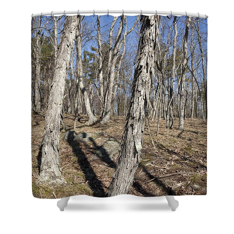 Forest Shower Curtain featuring the photograph Shagbark Hickory Forest by Erin Paul Donovan