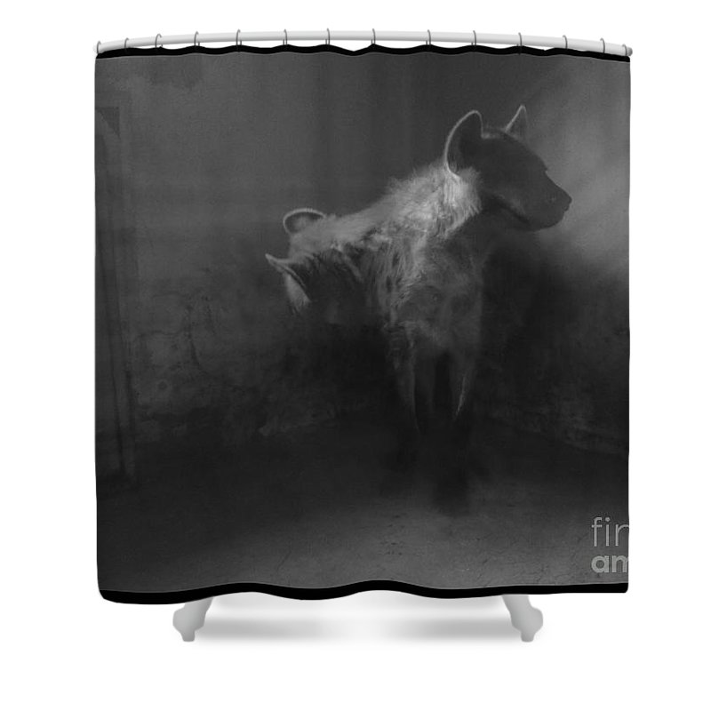 Hyena Zoo Black And White Cornered Beast Light Photo Manipulation Shower Curtain featuring the photograph Shamed Beast by Mina Milad