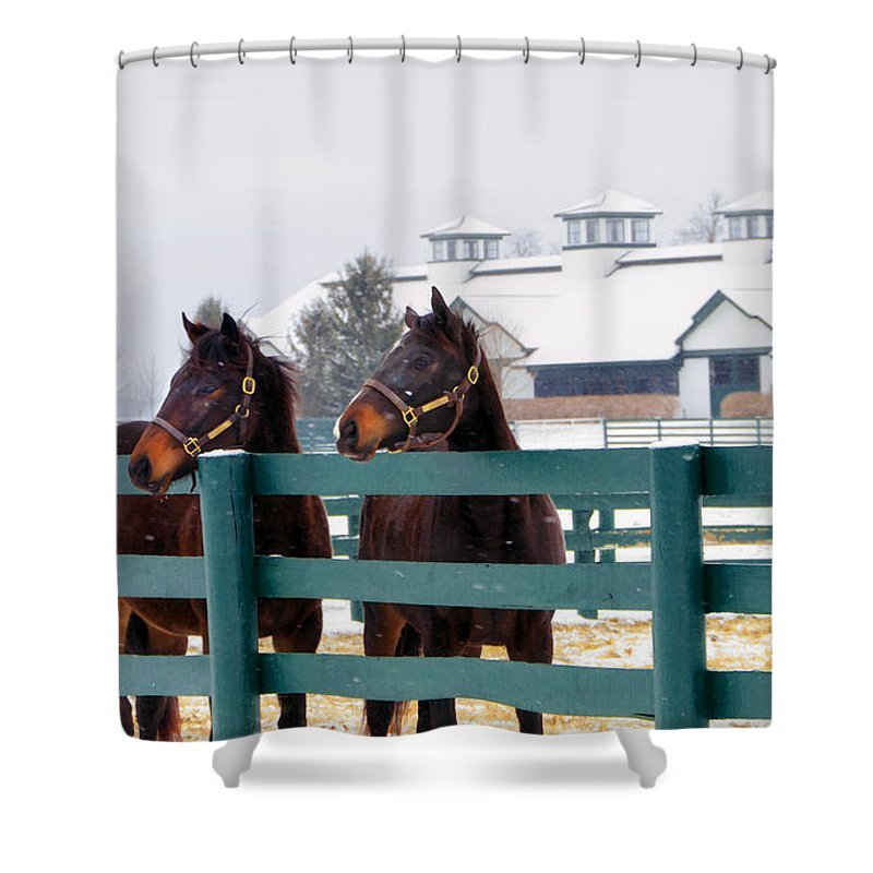 Horse Shower Curtain featuring the photograph Shawanee Winter by Sam Davis Johnson