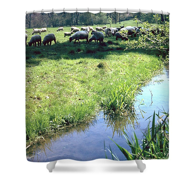 Sheep Shower Curtain featuring the photograph Sheep by Flavia Westerwelle