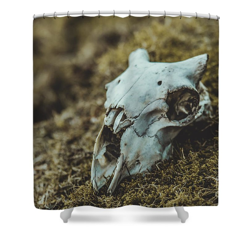 Shower Curtain featuring the photograph Sheep Skull by Marc Daly