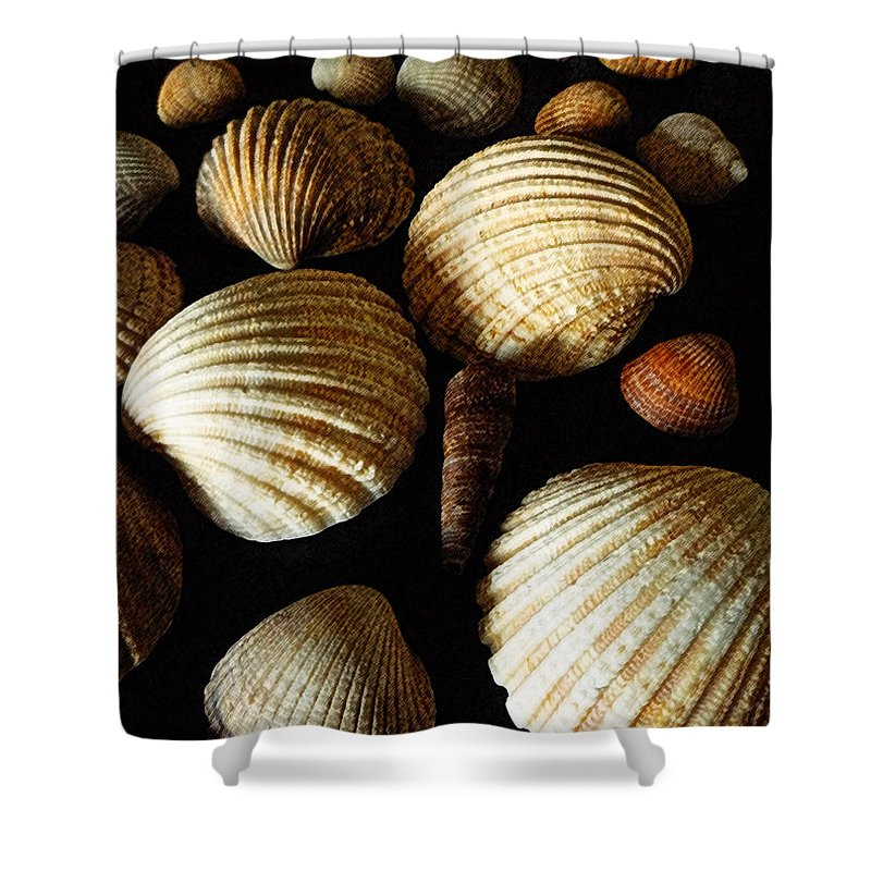 Shell Shower Curtain featuring the mixed media Shell Art - D by P Donovan