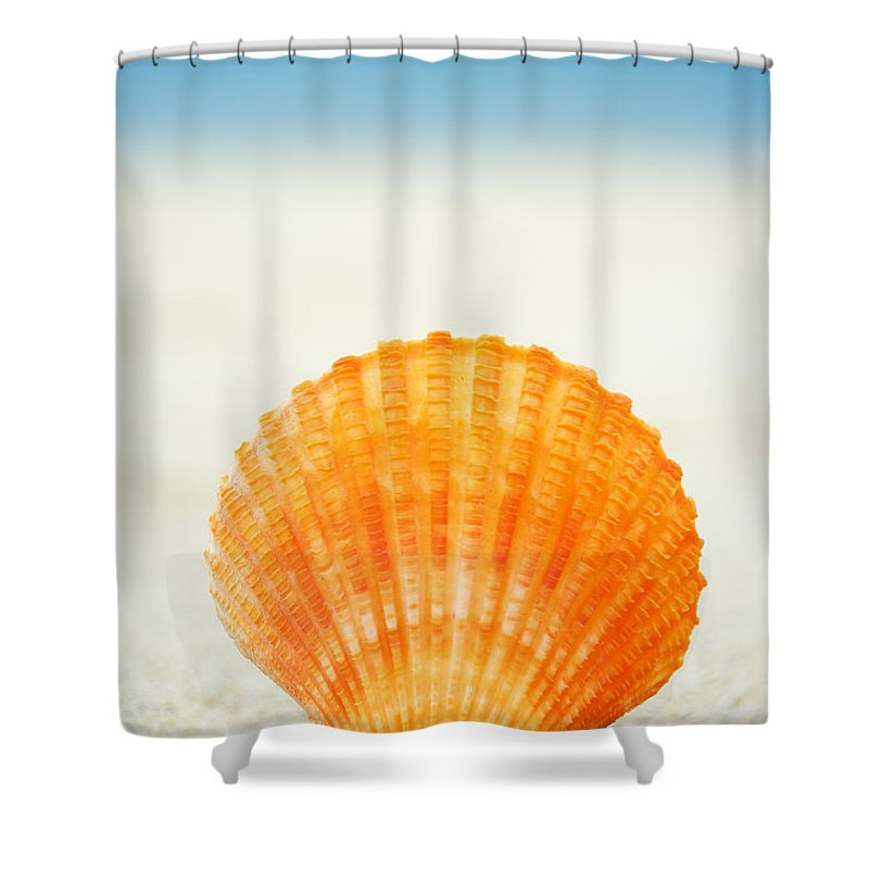 Afternoon Shower Curtain featuring the photograph Shell On Beach by Mary Van de Ven - Printscapes