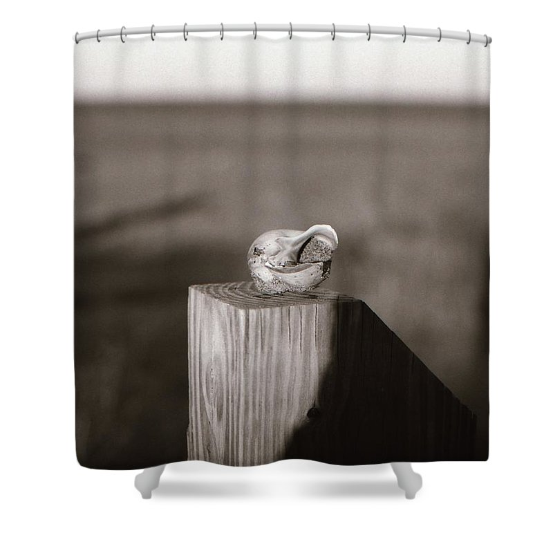 Shell Shower Curtain featuring the photograph Shell On Post by Carmine Taverna