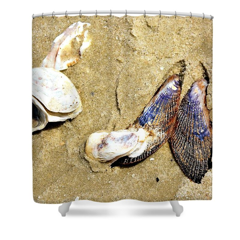 Seashells Shower Curtain featuring the photograph Shells On The Beach Of Jekyll by Katherine W Morse