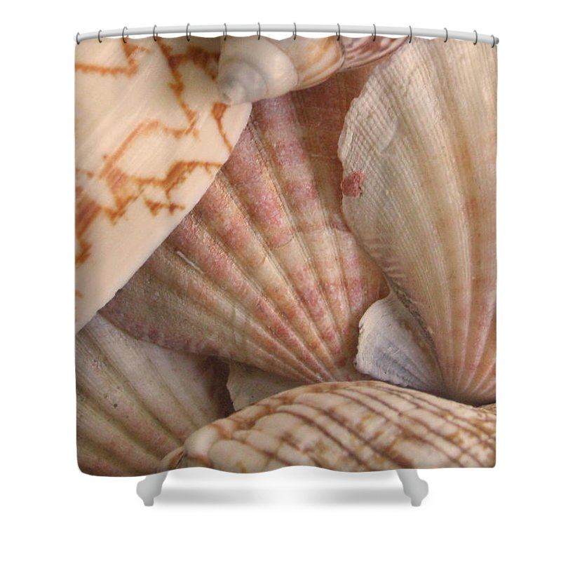Shells Shower Curtain featuring the photograph Shells by Natalie Bollinger