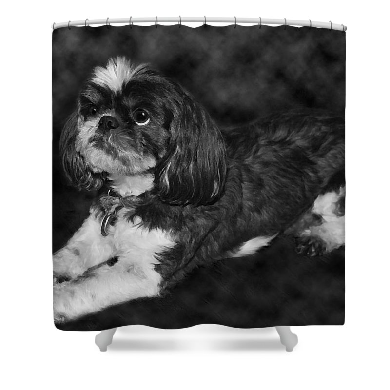 3scape Photos Shower Curtain featuring the painting Shih Tzu by Adam Romanowicz