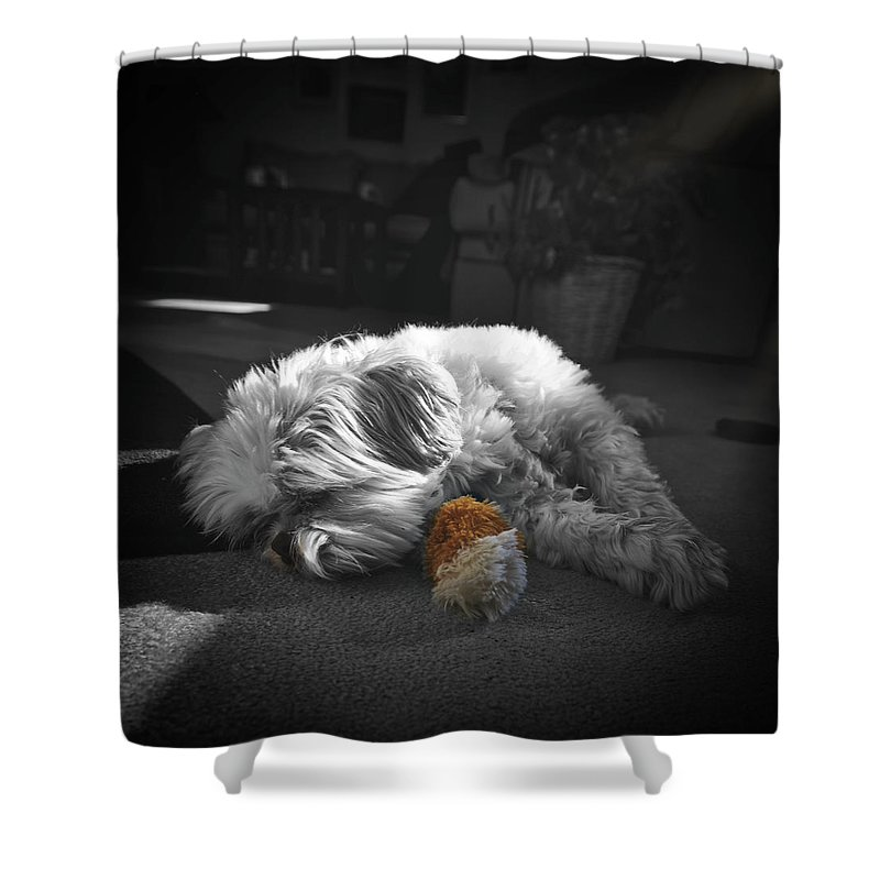 Dog Shower Curtain featuring the photograph Shih Tzu Sleeping In The Sun by Don Barone
