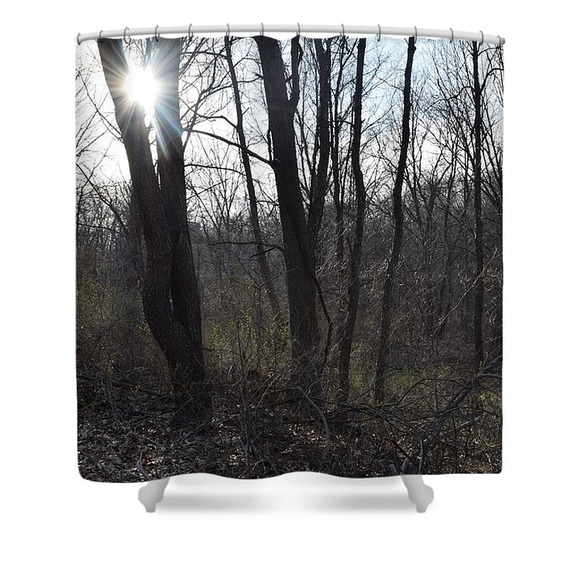 Trees Shower Curtain featuring the photograph Shine by Caren DeCesaris