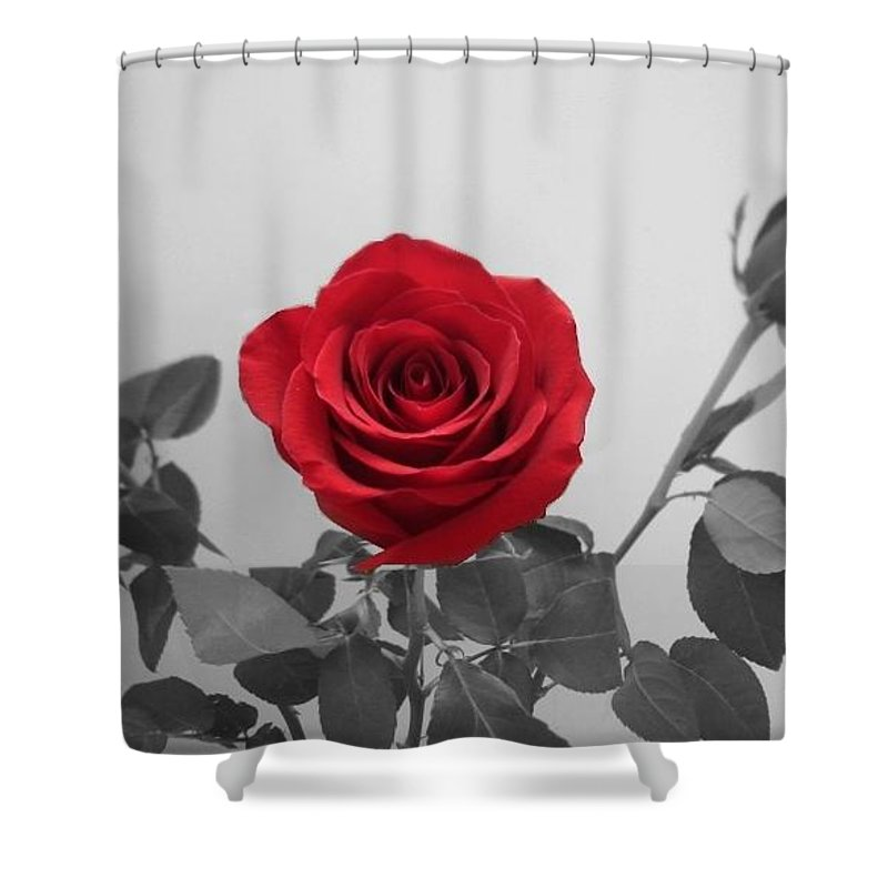 Roses Photography Shower Curtain featuring the photograph Shining Red Rose by Georgeta Blanaru