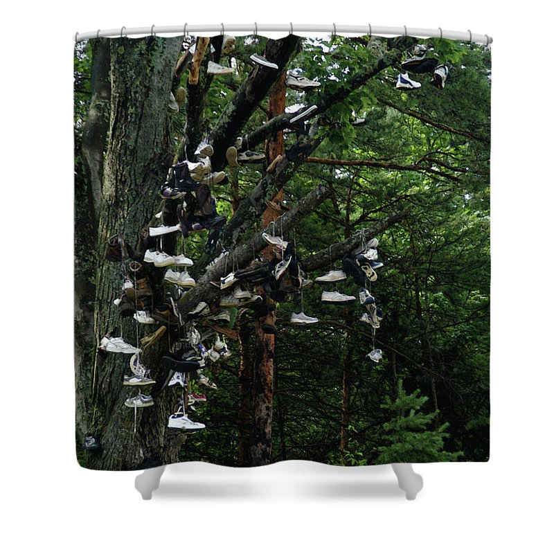 Amusement Shower Curtain featuring the photograph Shoe Tree by Linda Shafer