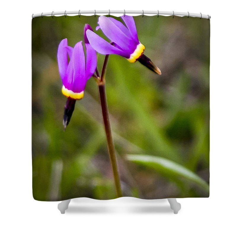 Wildflowers Shower Curtain featuring the photograph Shooting Star by Albert Seger