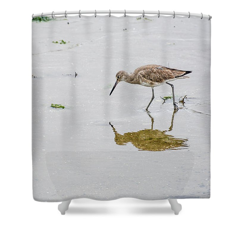 Avian Shower Curtain featuring the photograph Short-billed Dowitcher #4 by Tim Bond