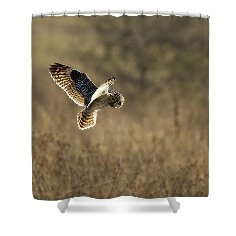 Birds Shower Curtain featuring the photograph Short-eared Owl About To Strike by Bob Kemp