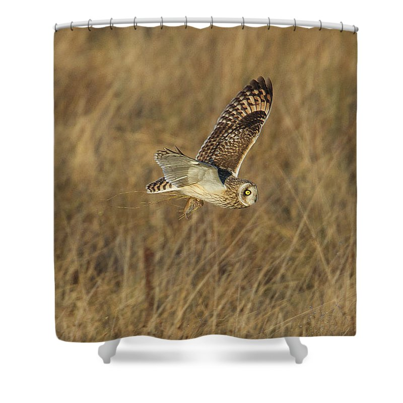 Birds Shower Curtain featuring the photograph Short-eared Owl With Vole by Bob Kemp