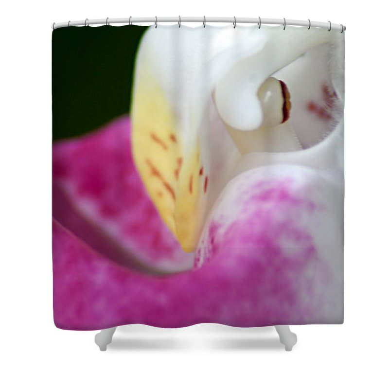 Showy Ladyslipper Shower Curtain featuring the photograph Showy Ladyslipper Up Close And Personal by Larry Ricker
