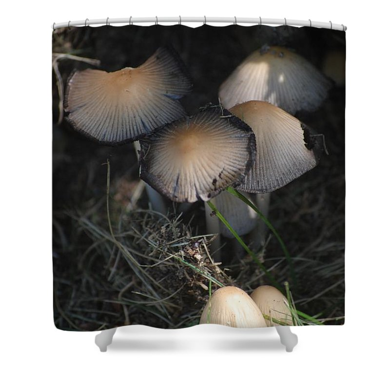 Digital Photograph Shower Curtain featuring the photograph Shrooms 1 by David Lane