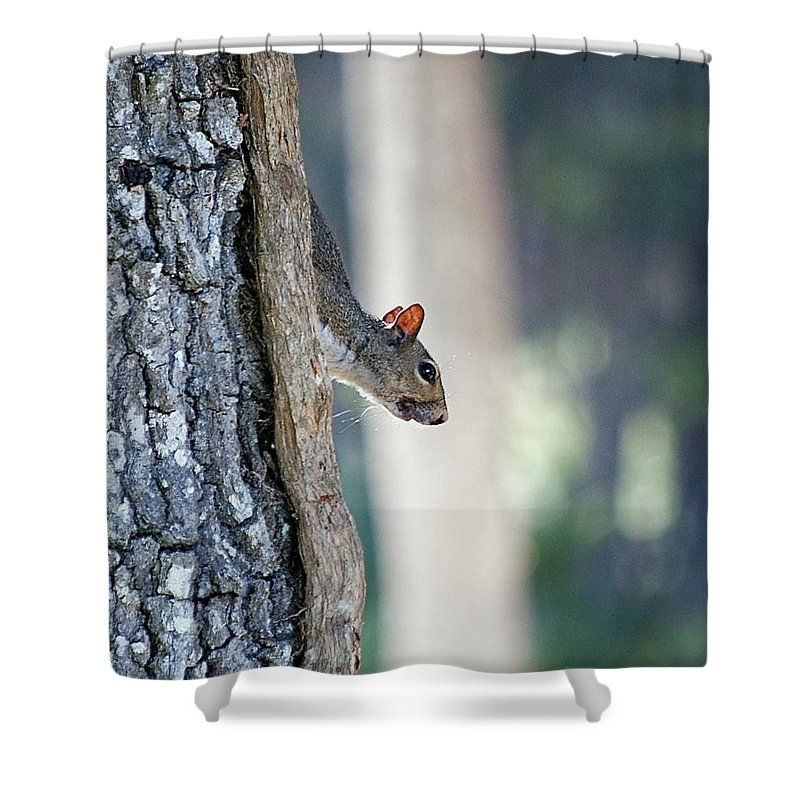 Squirrel Shower Curtain featuring the photograph Shy Squirrel by Kenneth Albin