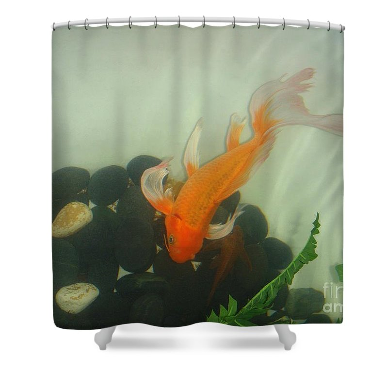 Orange Shower Curtain featuring the photograph Siamese Fighting Fish 1 by Mary Deal
