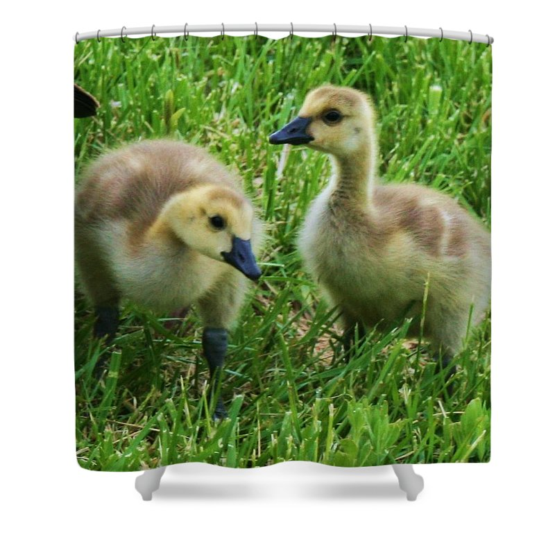 Nature Shower Curtain featuring the photograph Siblings by Angus Hooper Iii