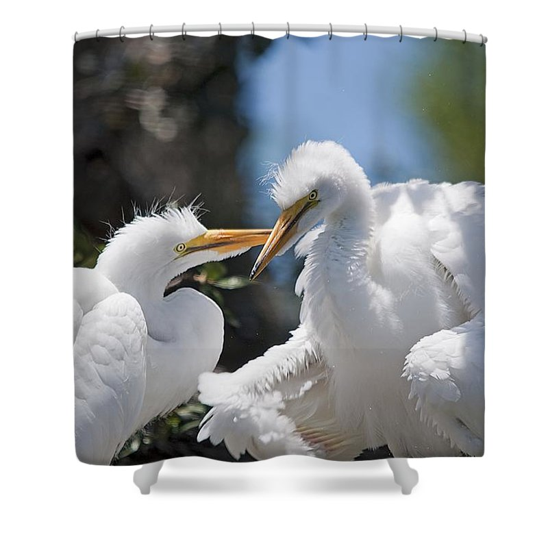 Wildlife Shower Curtain featuring the photograph Siblings by Kenneth Albin