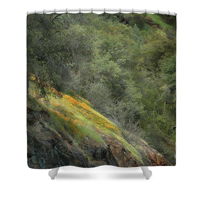 California Shower Curtain featuring the photograph Sierra Poppies by Norman Andrus