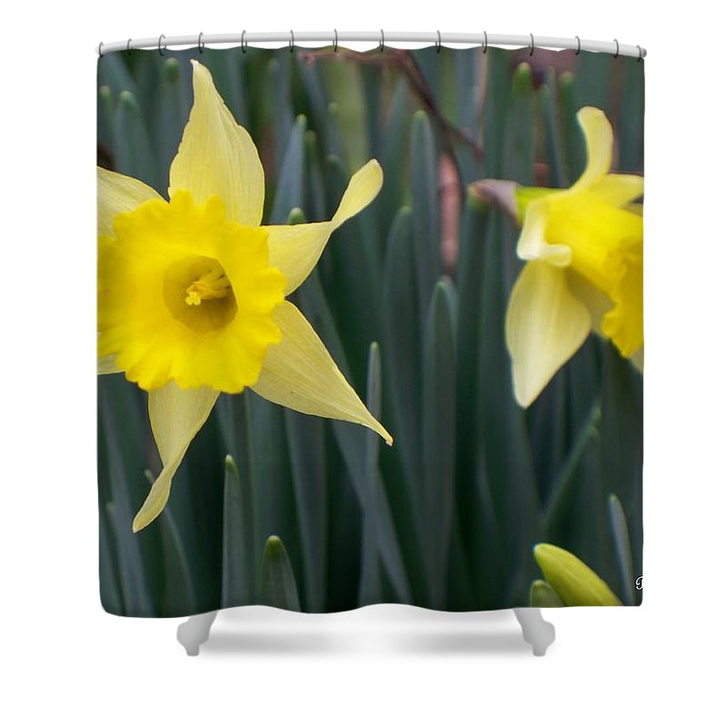 Daffodil Shower Curtain featuring the photograph Sign Of Spring by Betty Northcutt