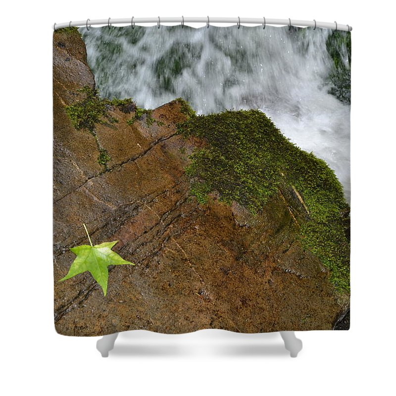 Leaf Shower Curtain featuring the photograph Silence by Denise Jakob