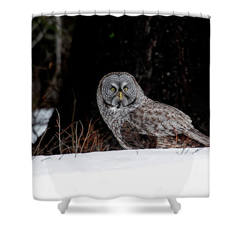 Owl Shower Curtain featuring the photograph Silent Hunter by Ronnie and Frances Howard