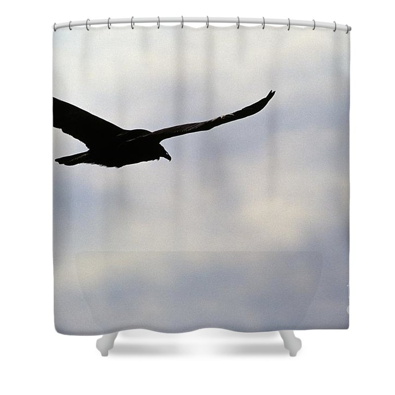 Silhouette Shower Curtain featuring the photograph Silhouette Of A Turkey Vulture by Erin Paul Donovan