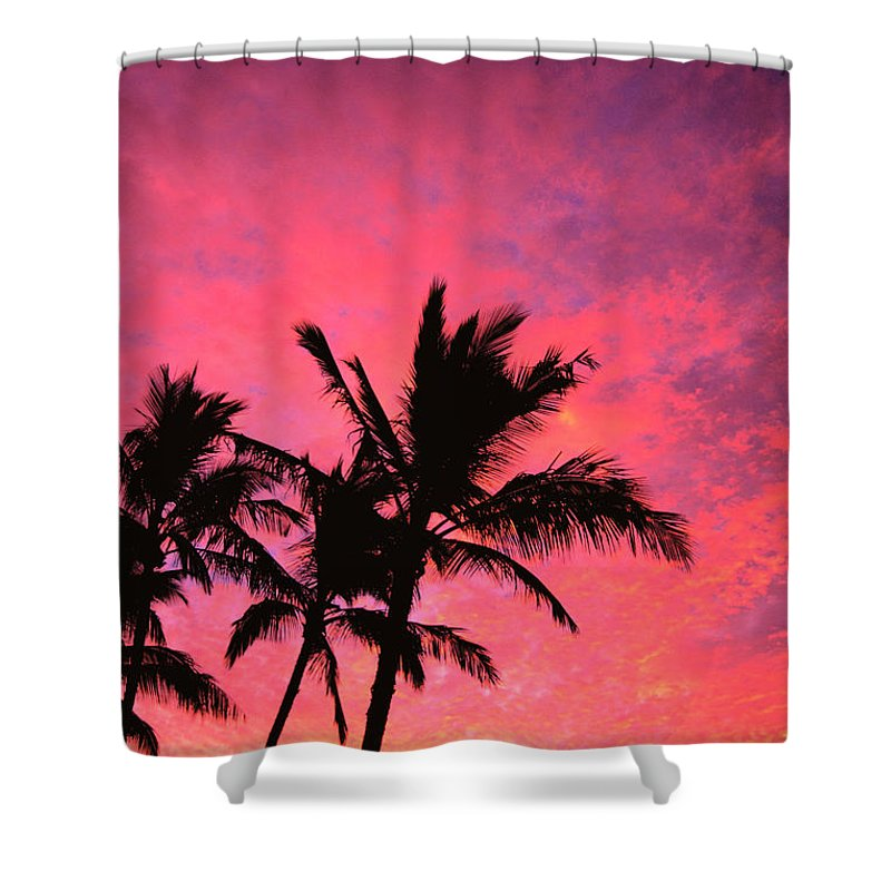 Amaze Shower Curtain featuring the photograph Silhouetted Palms by Ray Mains - Printscapes