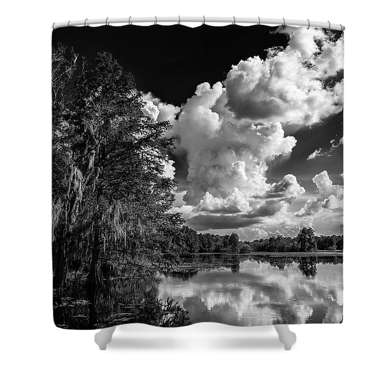 Bald Cypress Photographs Shower Curtains