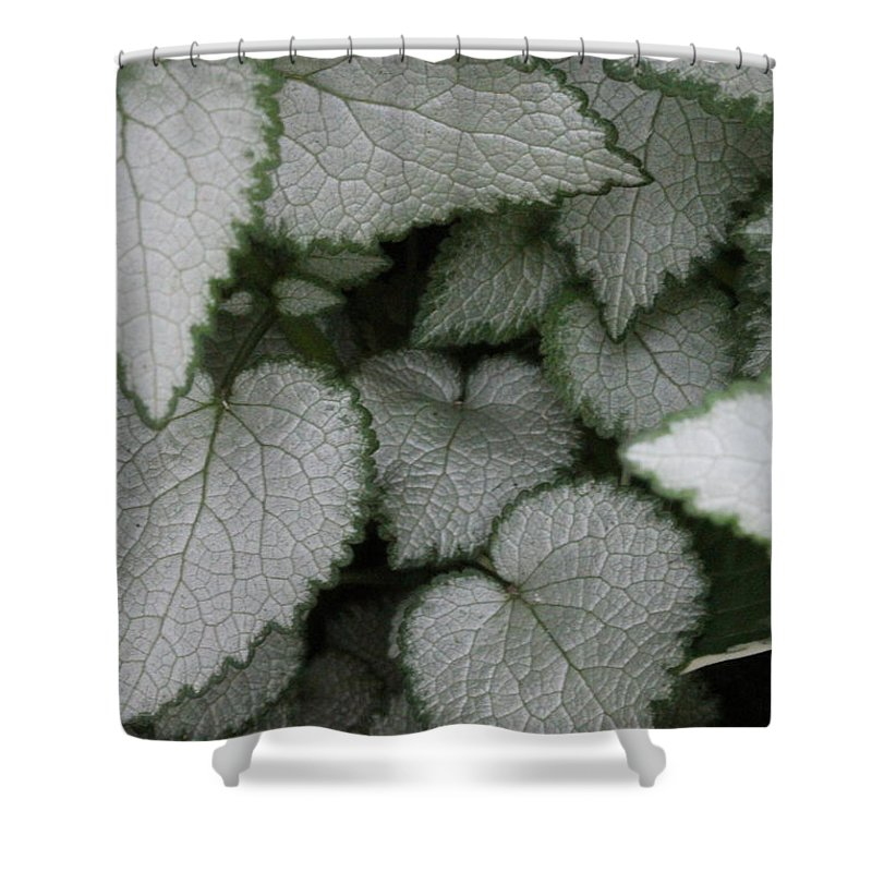 Silver Sensations Shower Curtain featuring the photograph Silver Sensations by Ed Smith