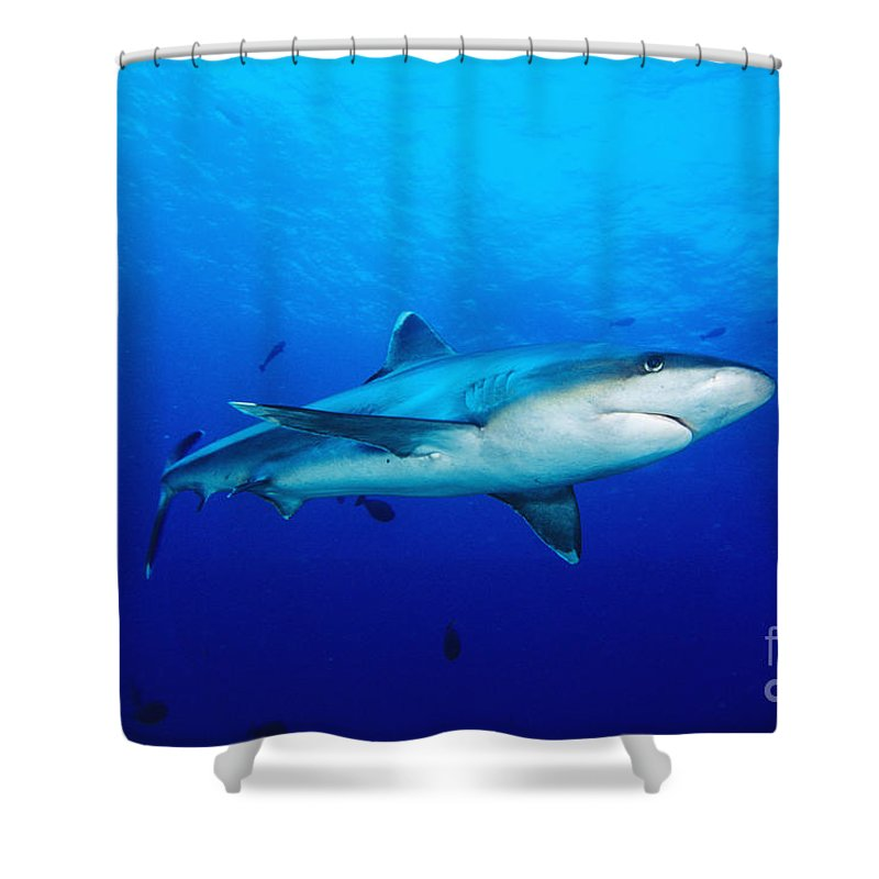 Above Shower Curtain featuring the photograph Silvertip Shark In Thailand by Dave Fleetham - Printscapes