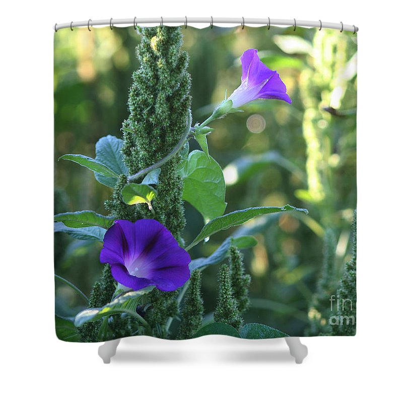 Flower Shower Curtain featuring the photograph Simple Beauty by Smilin Eyes Treasures