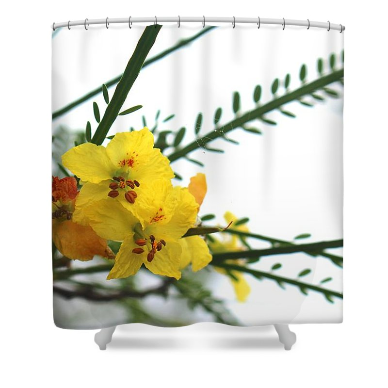 Wild Flowers Shower Curtain featuring the photograph Simple Flower by Tali Turem