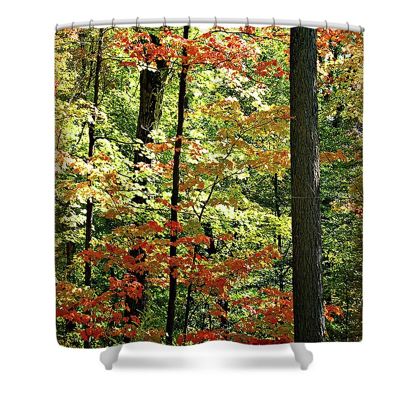 Autumn Shower Curtain featuring the digital art Simply Autumn by Joan Minchak