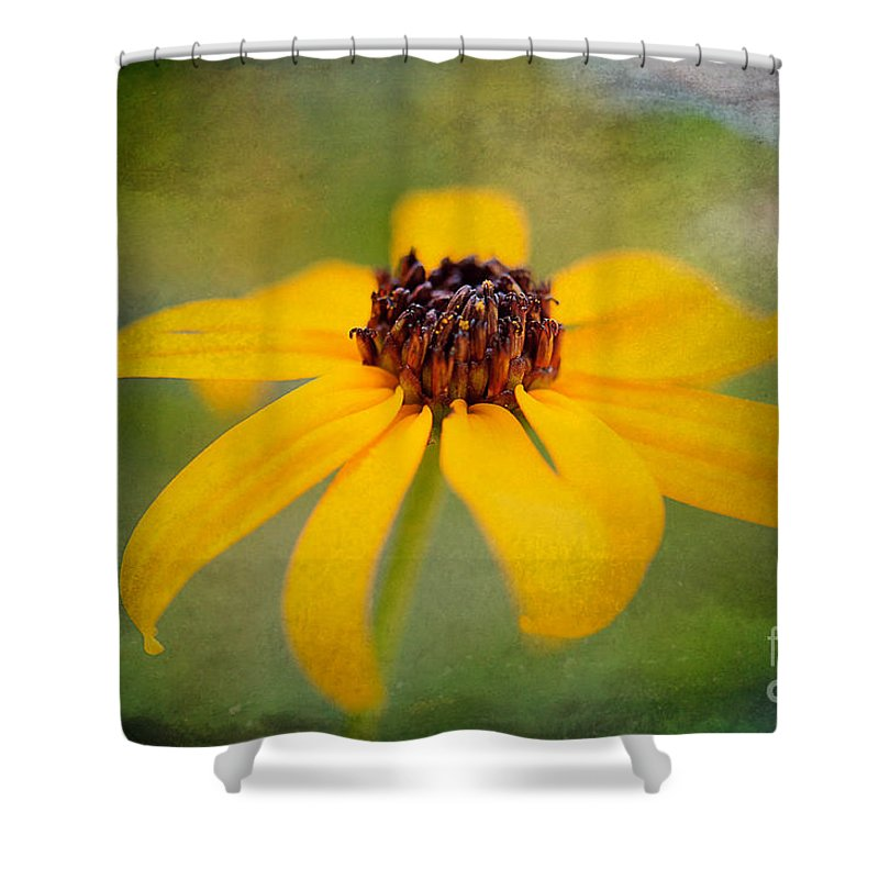 Flower Shower Curtain featuring the photograph Simply Susan by Lois Bryan