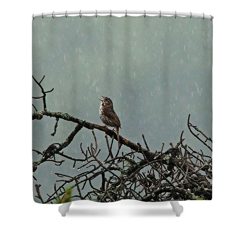 Sparrows Shower Curtain Featuring The Photograph Singing In Rain By Debbie Oppermann