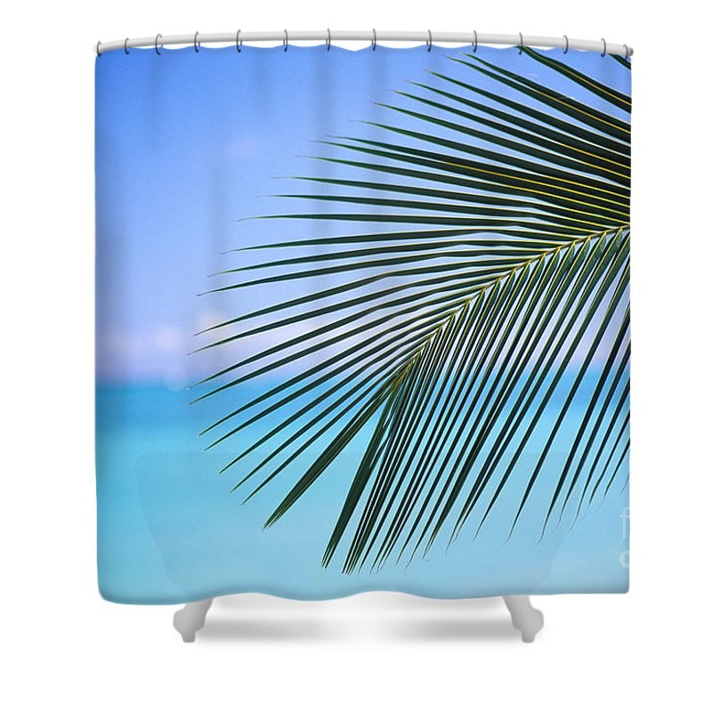 Afternoon Shower Curtain featuring the photograph Single Palm Frond by Dana Edmunds - Printscapes
